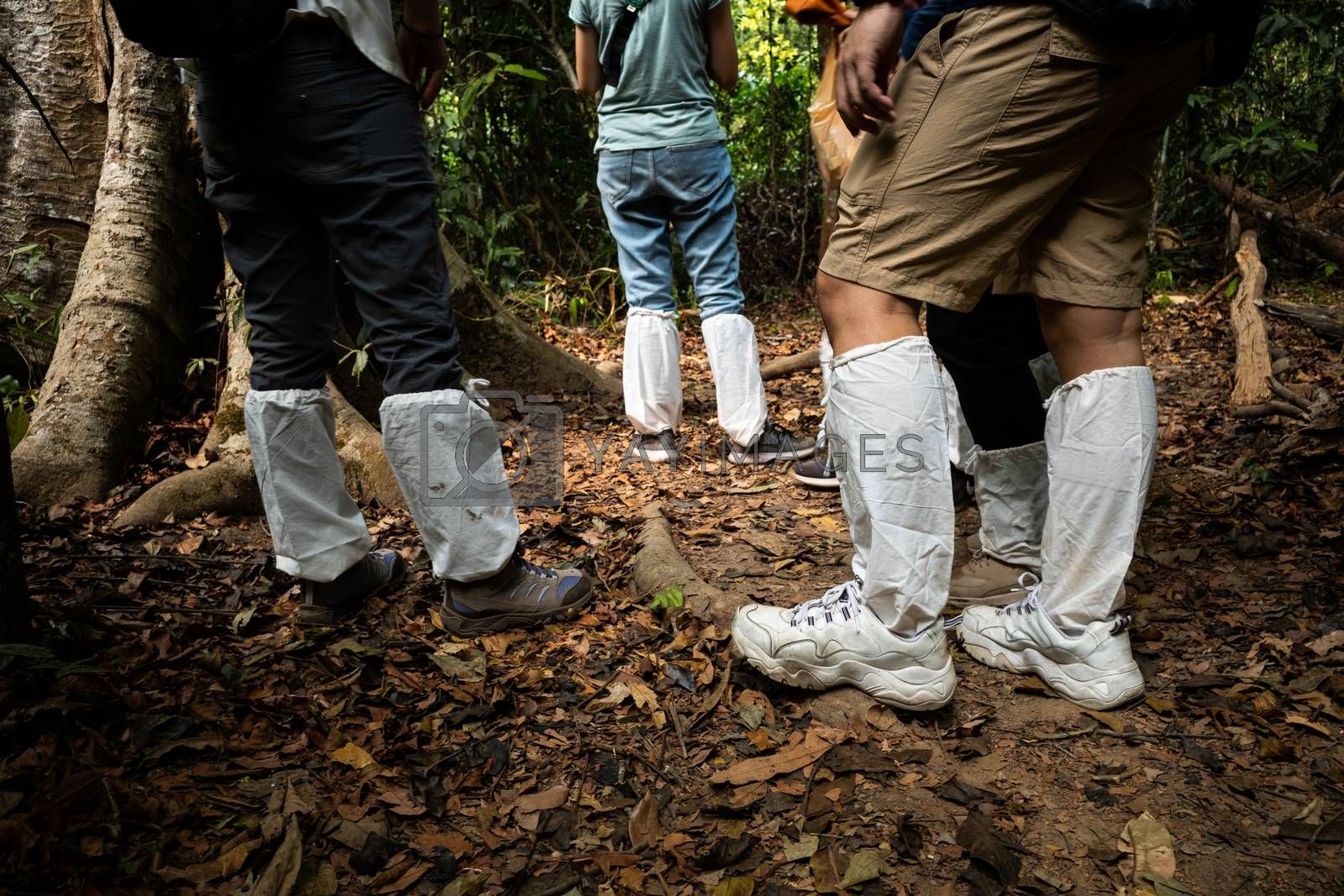 Legs of asian hikers covered by white long socks on tropical forest trekking trail to protect legs from injury and leeches on wet ground.