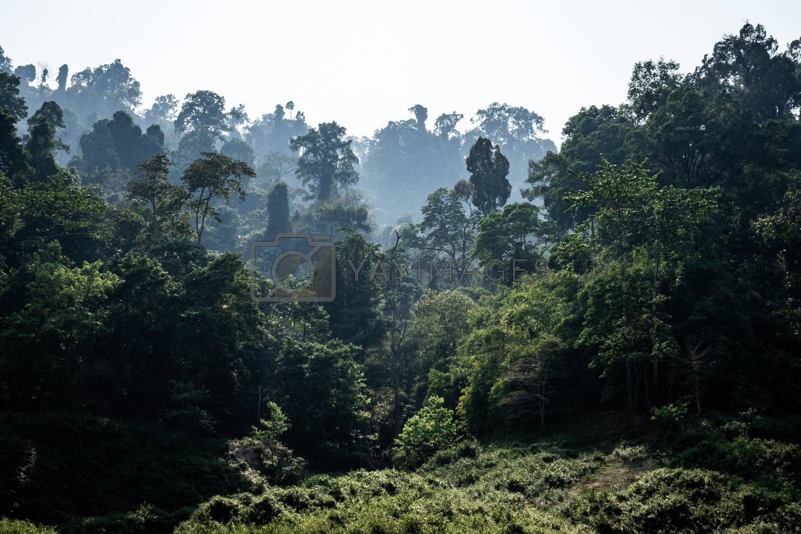 Landscape of tropical rainforest, haze cover green area in morning after moisture touching heat of sunlight, Khao Yai national park, Thailand.