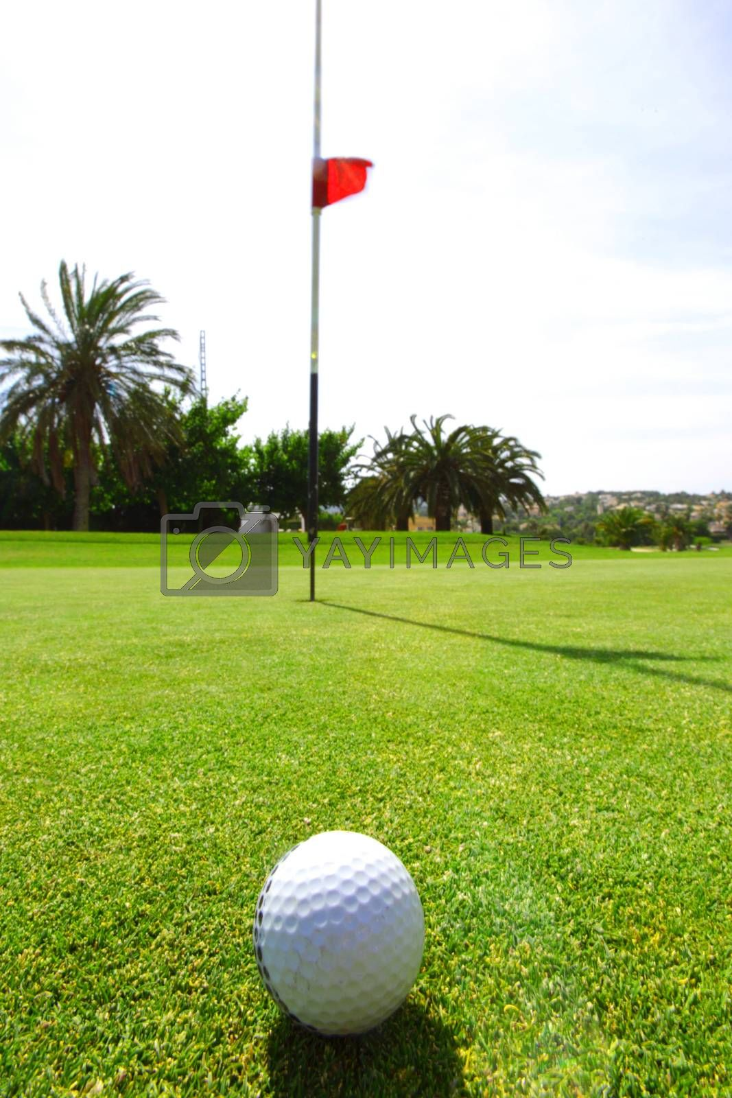 golf-ball on freen of course red flag on background