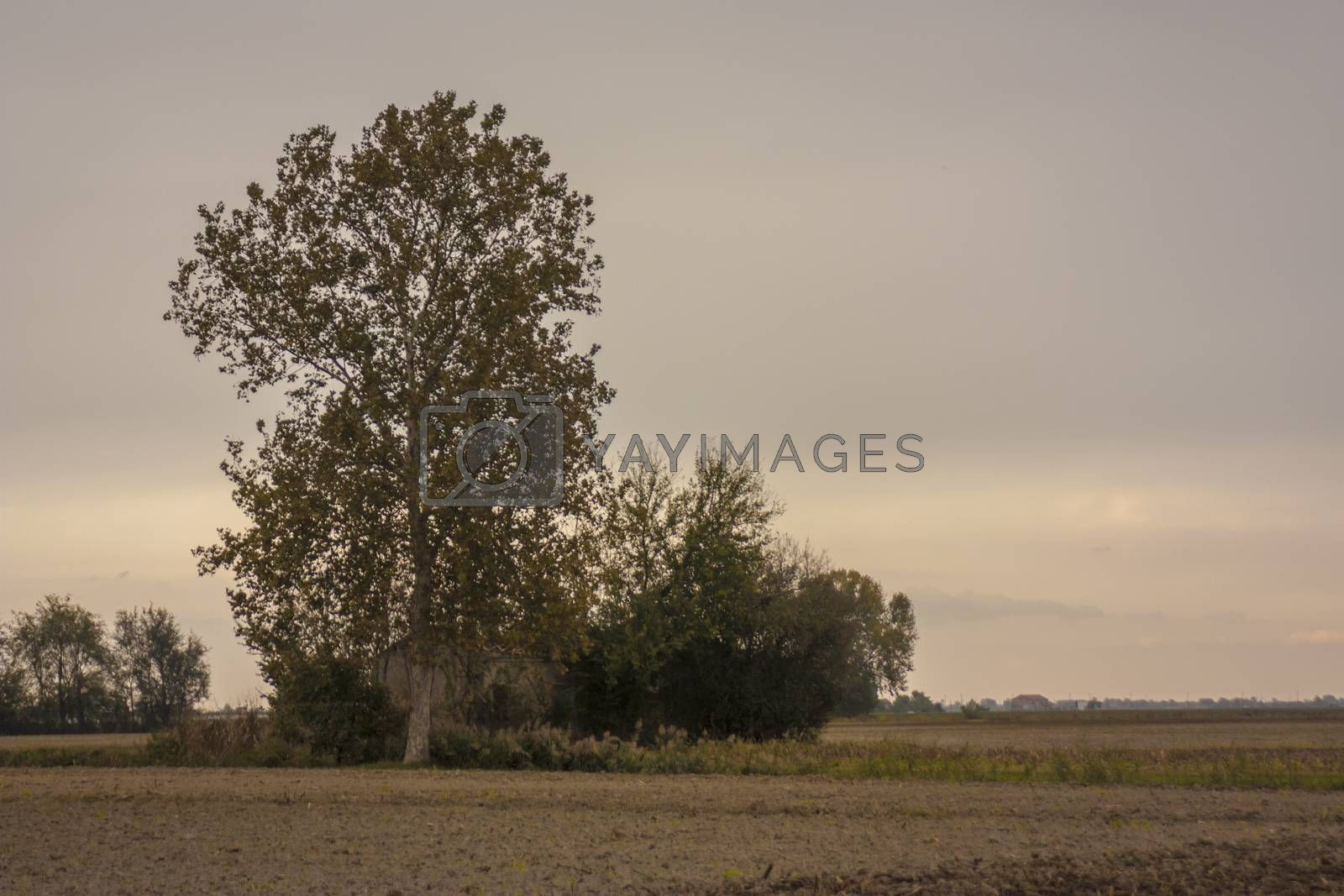 Italian countryside landscape with a big tree at sunset