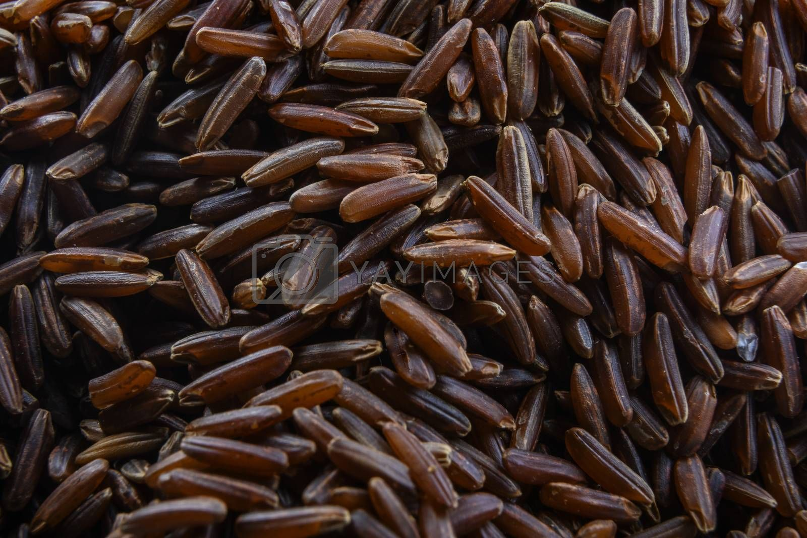 Raw brown rice is a beautiful background.