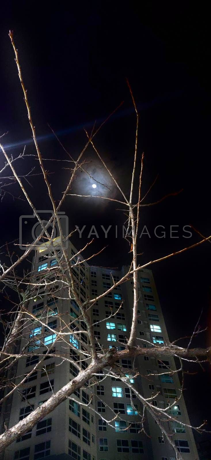 Tree branches in te foreground with lit residential building in night and a bright moon shining proudly