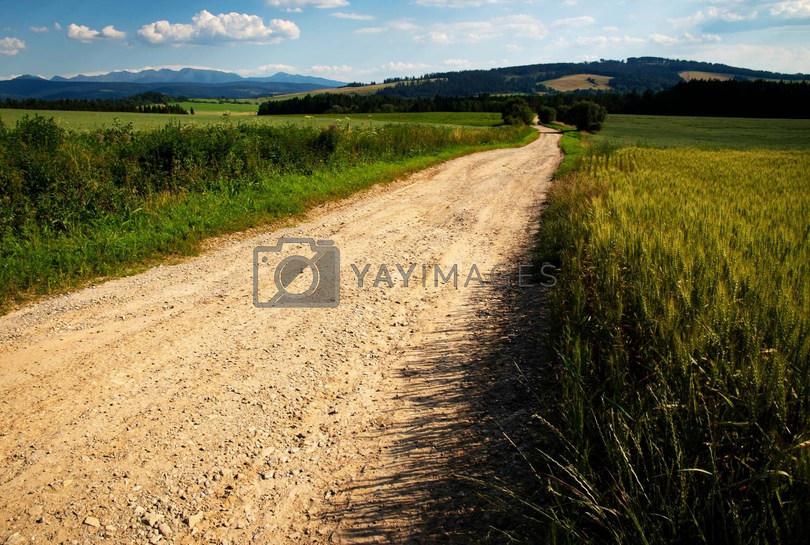 landscape background sandy path through picturesque countryside