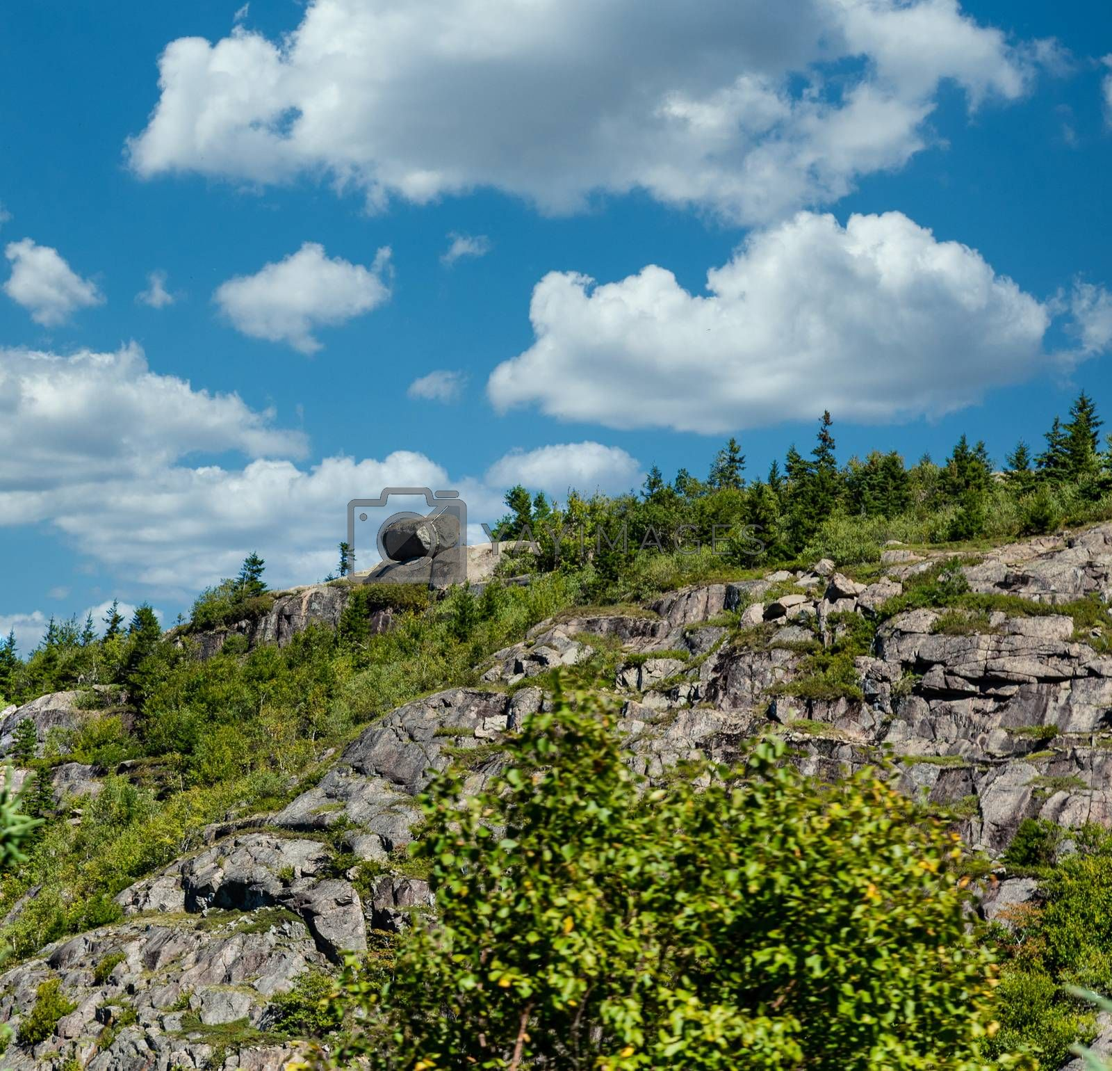 Greenery Over Rocky Hill  in Maine by dbvirago