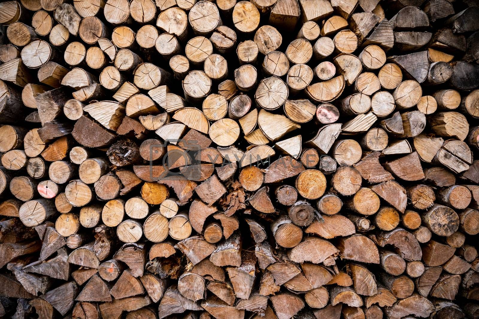 Close focus on cut log woods from softwood trees ready to use as fuel firewood.