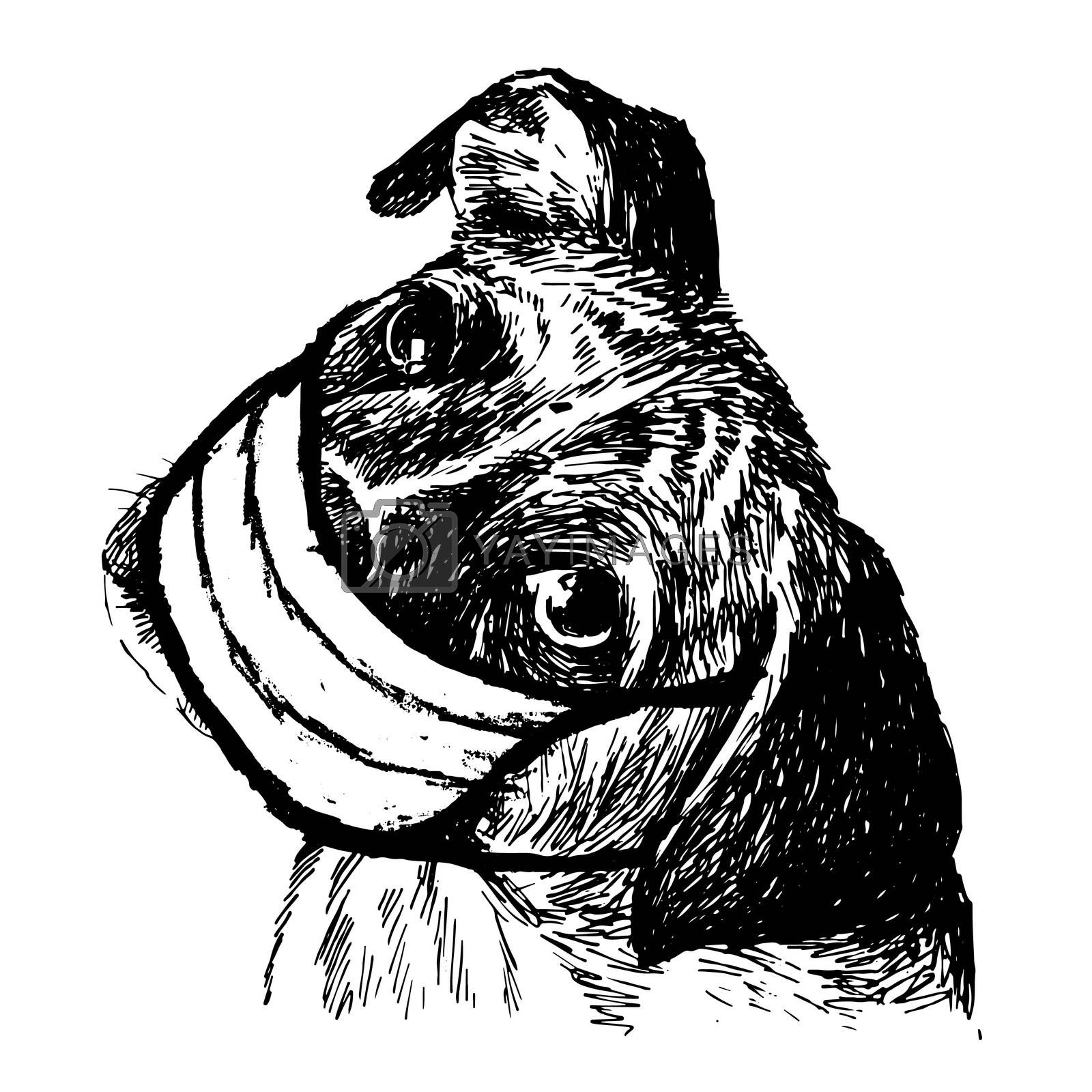 freehand sketch illustration of Boxer dog with mask doodle hand drawn