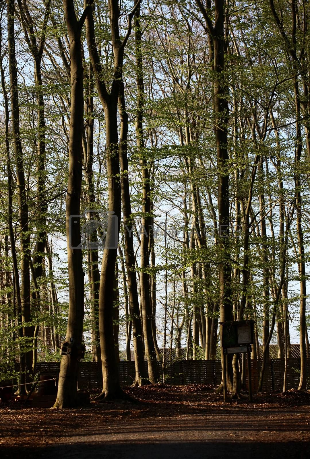 Haltern am see, germany, tuesday 21 april 2020 kletterwald man alone modeling covid-19 season background prints