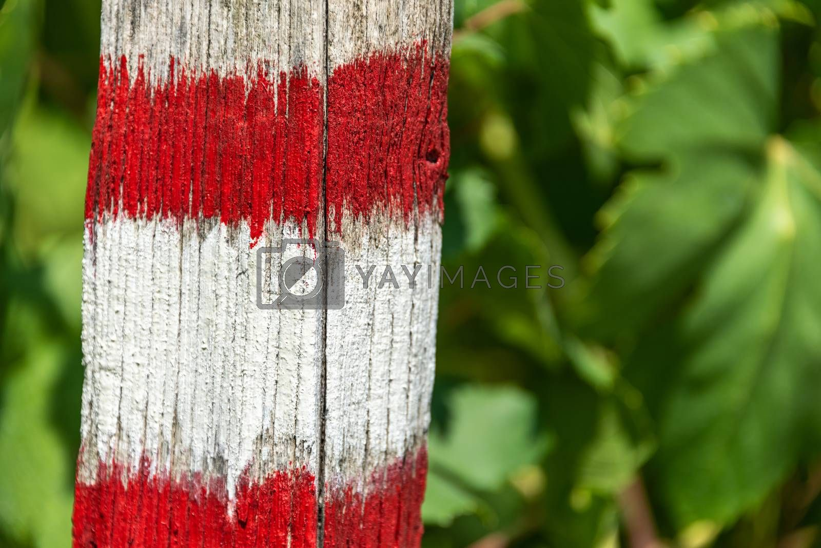 The white and red tourist trail sign painted on the tree. The green leaves as background.