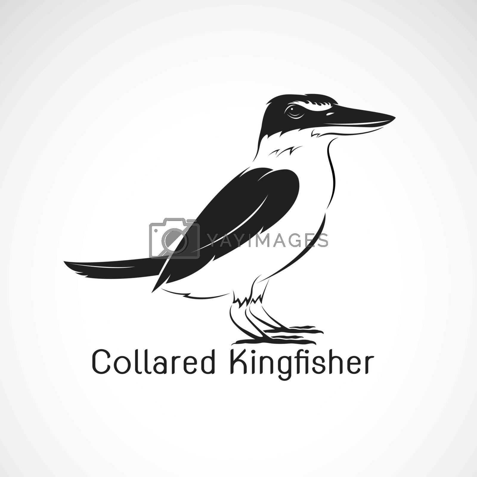 Collared kingfisher(Todiramphus chloris) isolated on white background. Birds. Animals. Easy editable layered vector illustration.