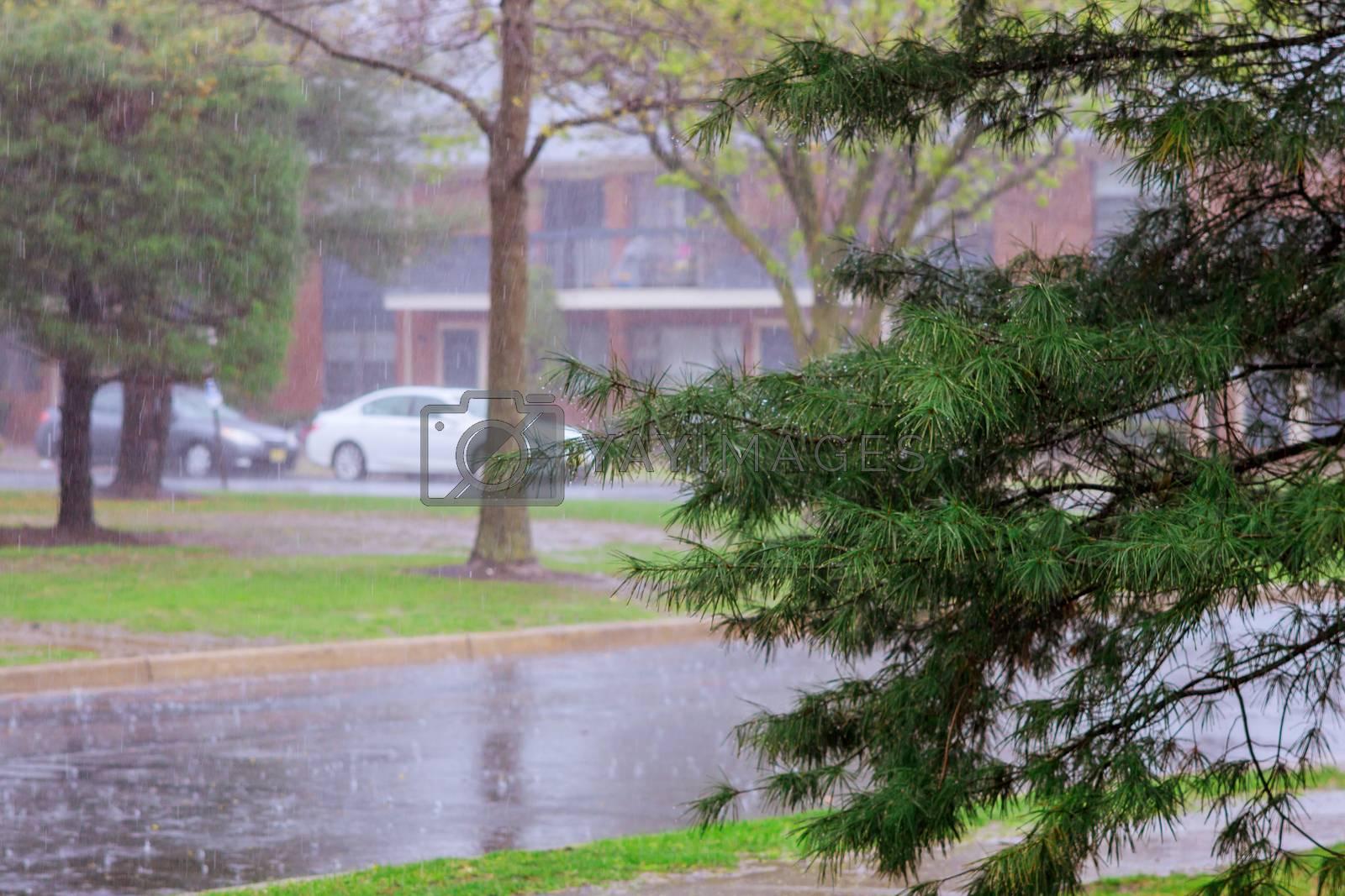 Rainwater dripping the rainy season apartment trees under during heavy rain