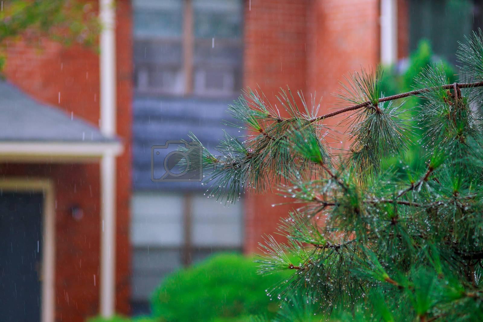 Rainy day tree heavy wind hurricane during the rainy season