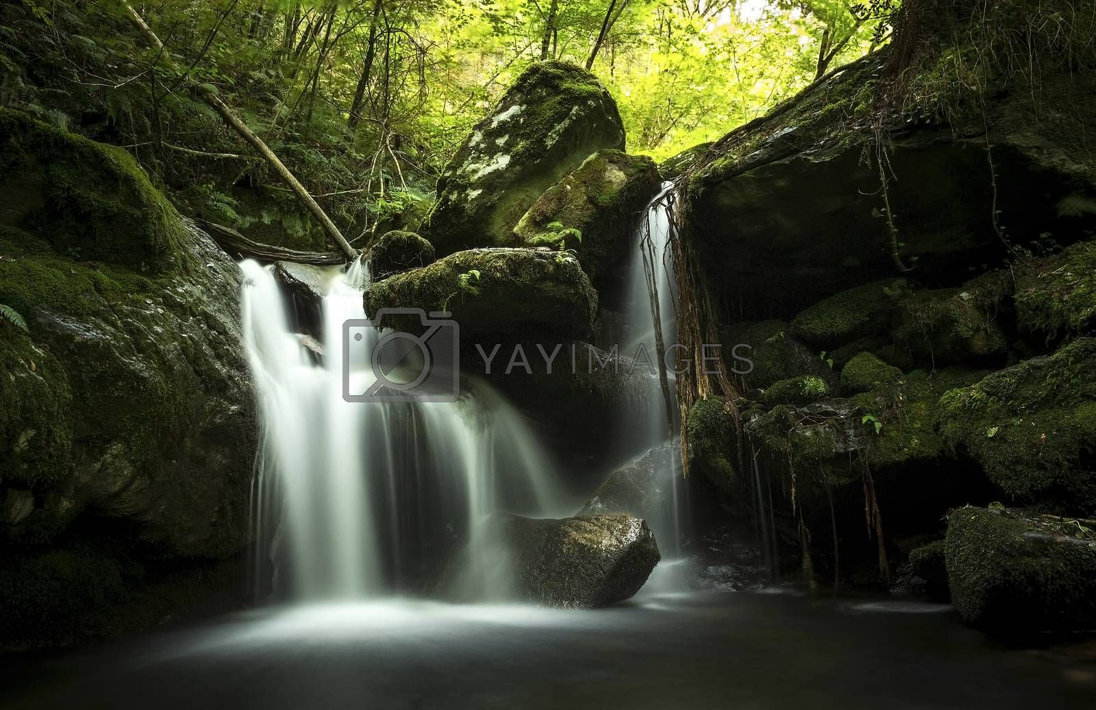 Stream of water between moss-covered rocks in a lush green forest