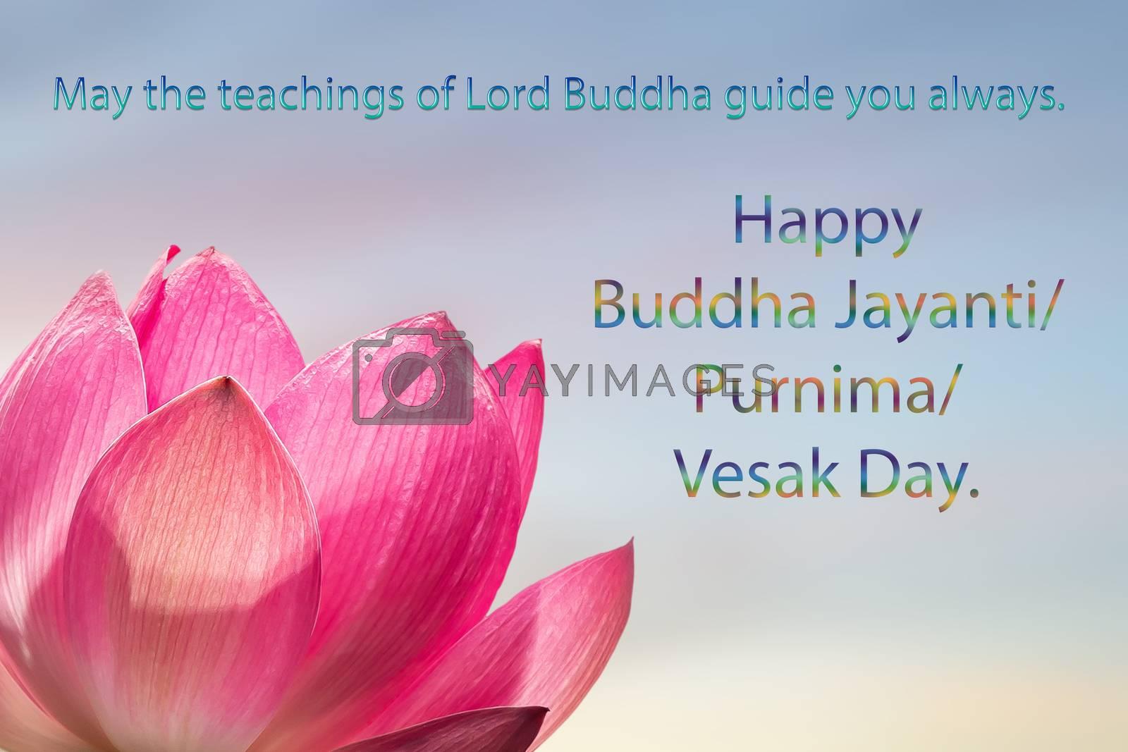Congratulations to the Buddhist celebration of Buddha's birthday, called Vesak Day, Buddhist lent, the Buddha's birthday, the worship of Buddha Purnima. Text on a pink Lotus flower background.