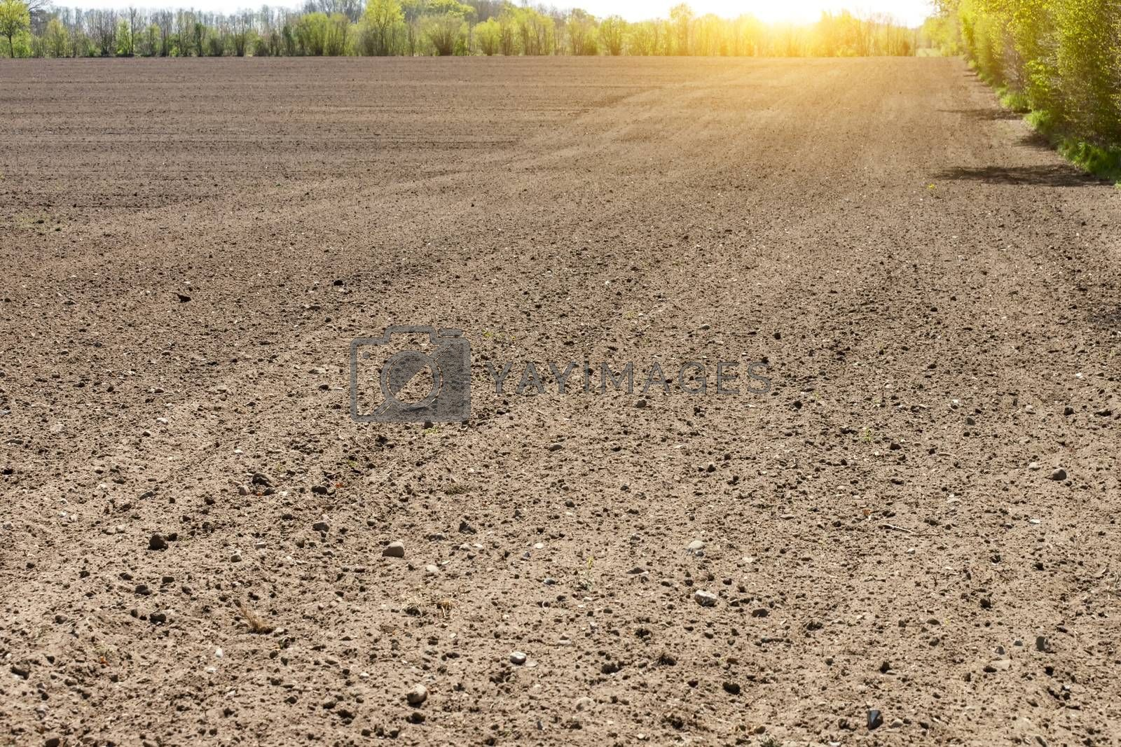 Royalty free image of Black agriculture field in sunset by Fr@nk