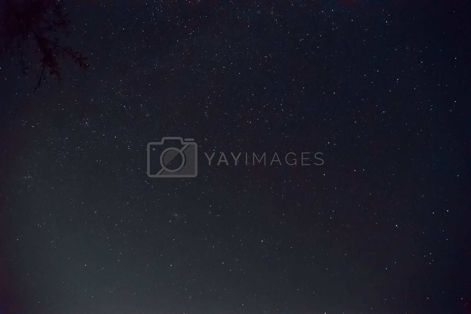 Long exposure night photo. A lot of stars with a lot of constellations. Nebula in sky with tree branch in frame. Night landscape with soft noise effect.