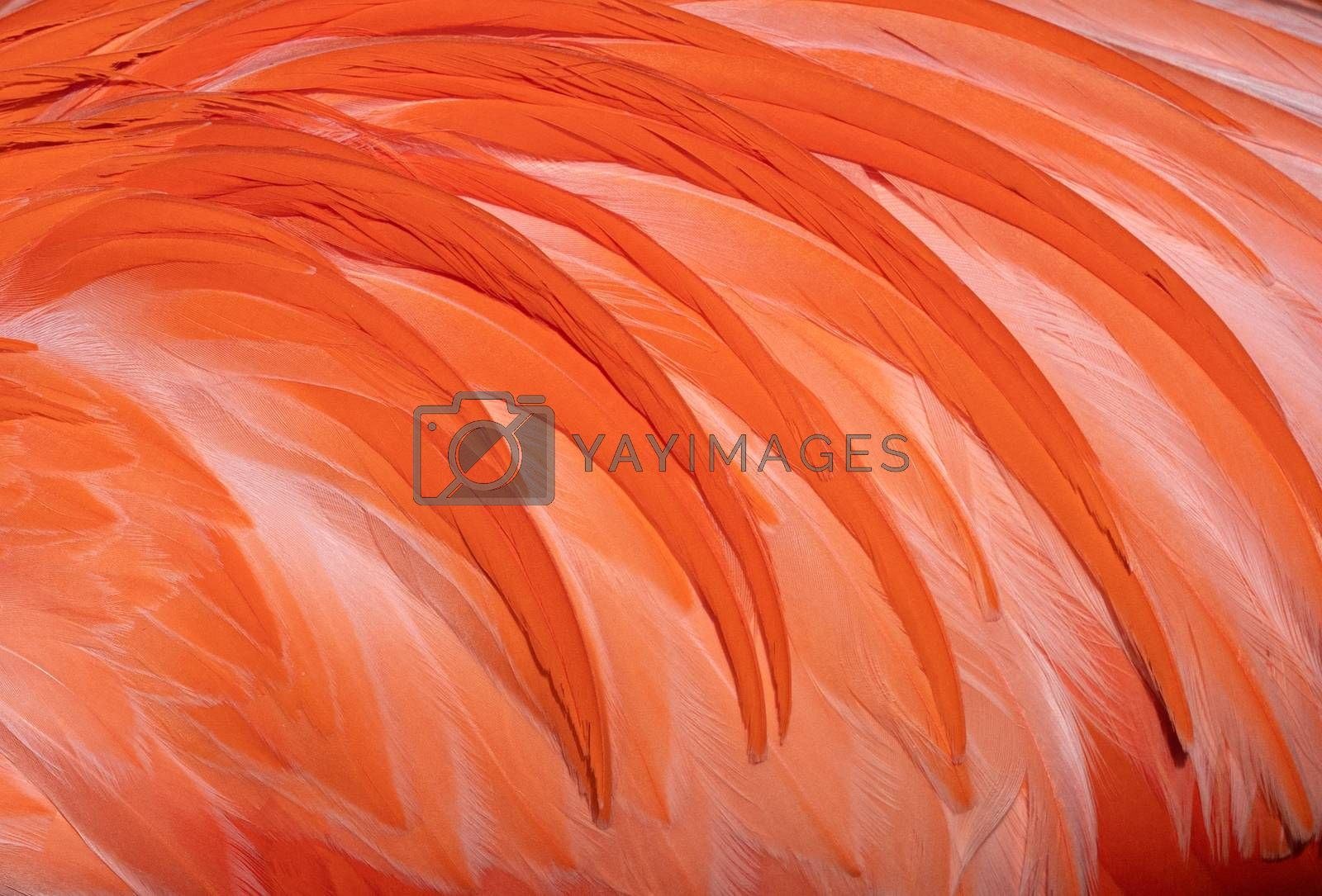 Background, close up image of feathers