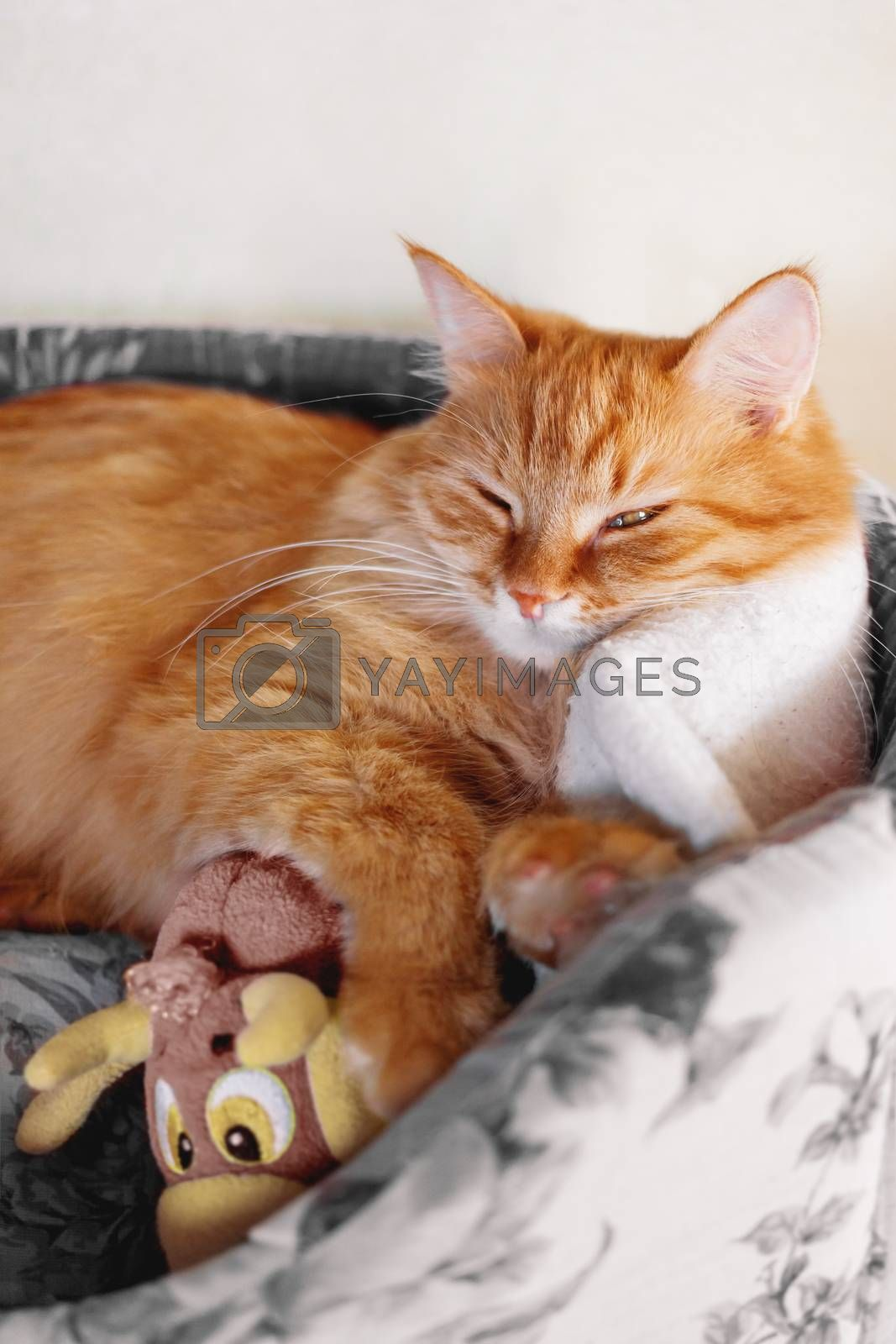 Cute ginger cat sleeping in soft fabric basket with toy. Fluffy pet in cozy home. Domestic animal relaxes.