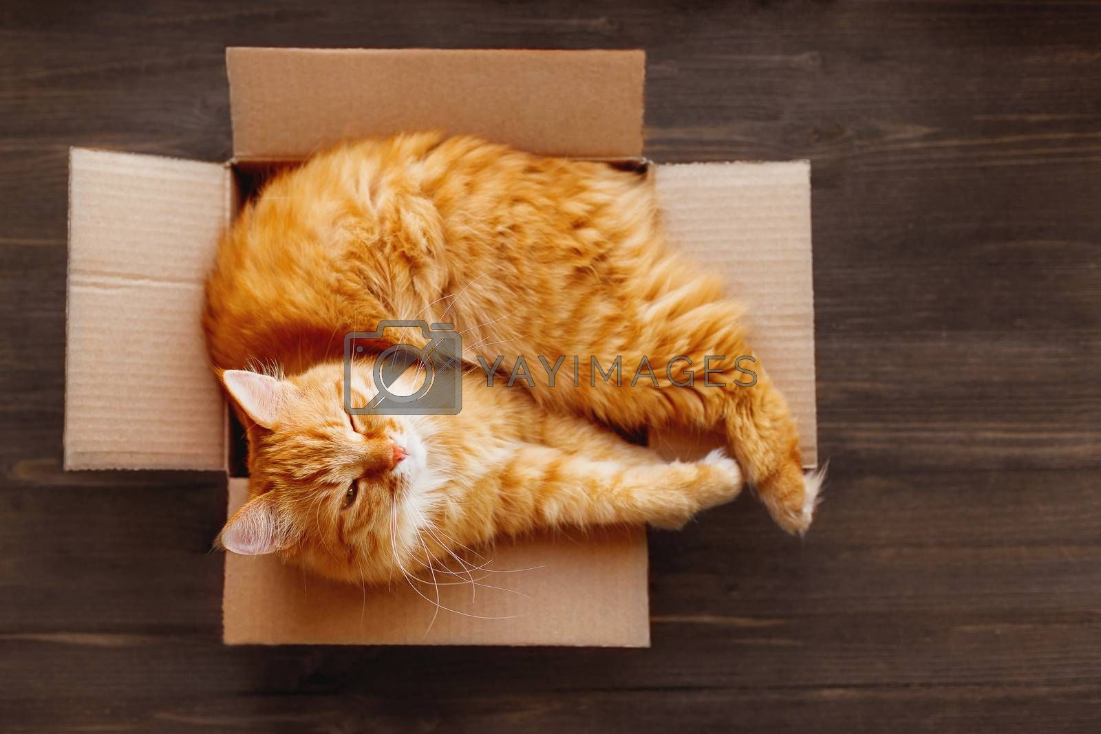 Cute ginger cat settled in carton box on wooden table. Fluffy pet stares with sleepy expression on face. Boxing Day concept.