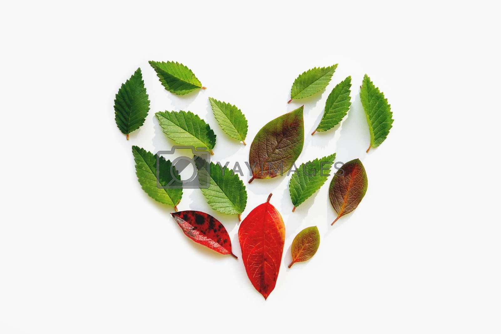 Top view on heart made of small bright green and red leaves on white background. Love of nature concept. Flat lay background with natural leaves.