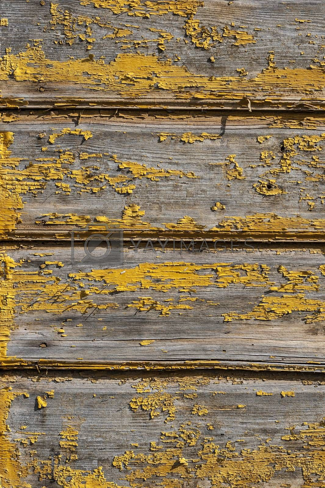 Rustic background made of wall of old wooden house with fall off yellow paint
