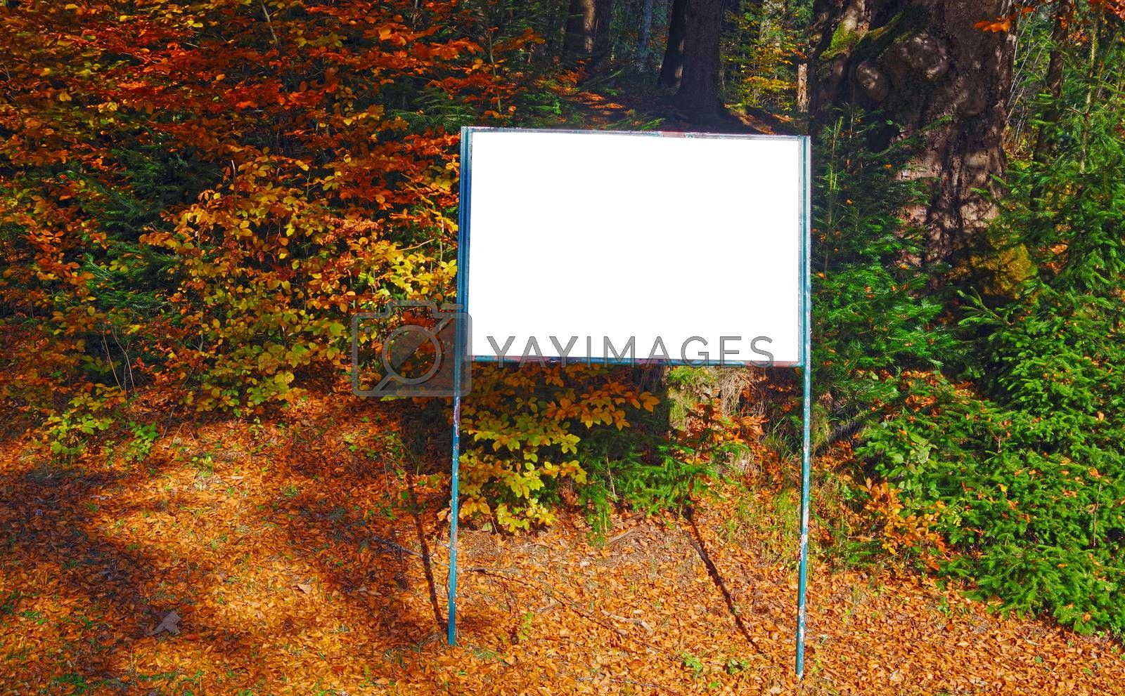 A blank white board for information in autumn forest