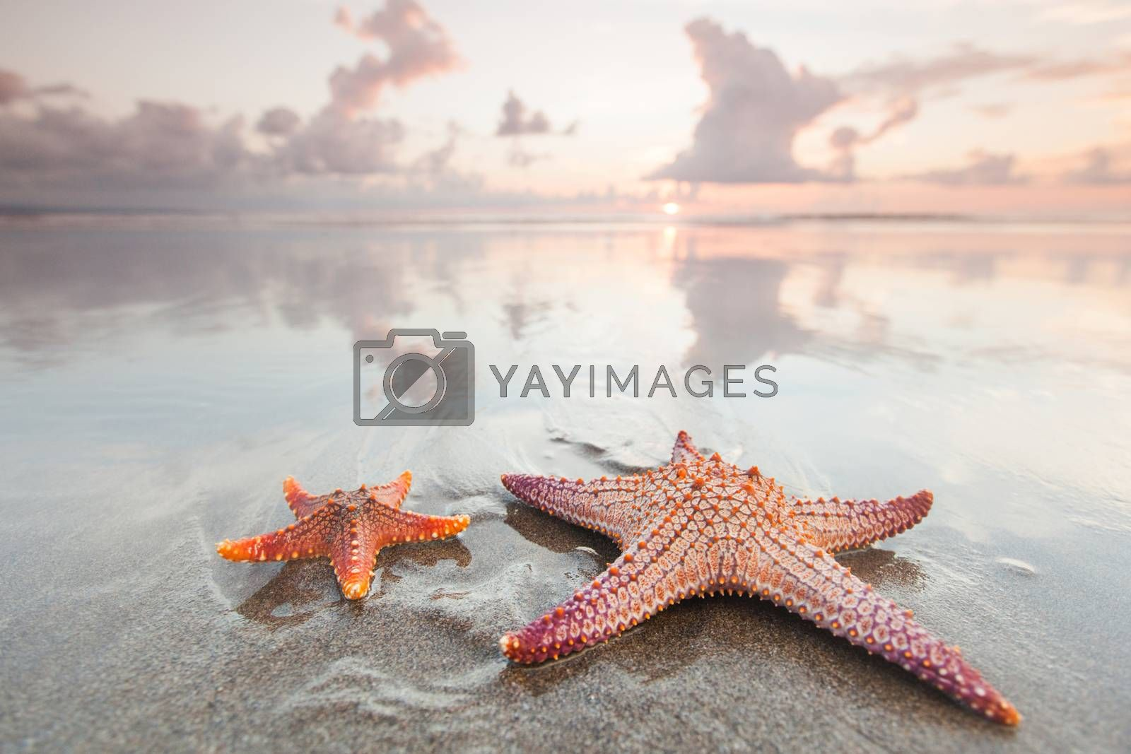 Two starfish on beach at sunset as summer vacation symbol