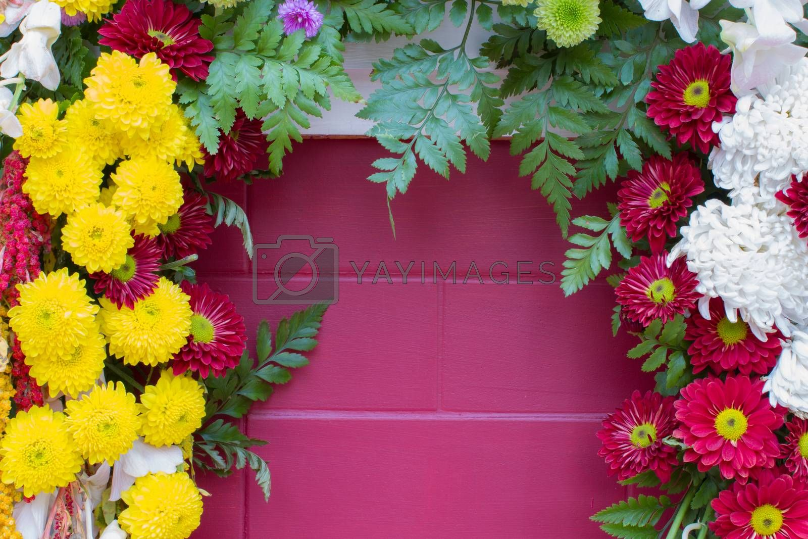 various flowers on the pink wall with copyspace in the middle.