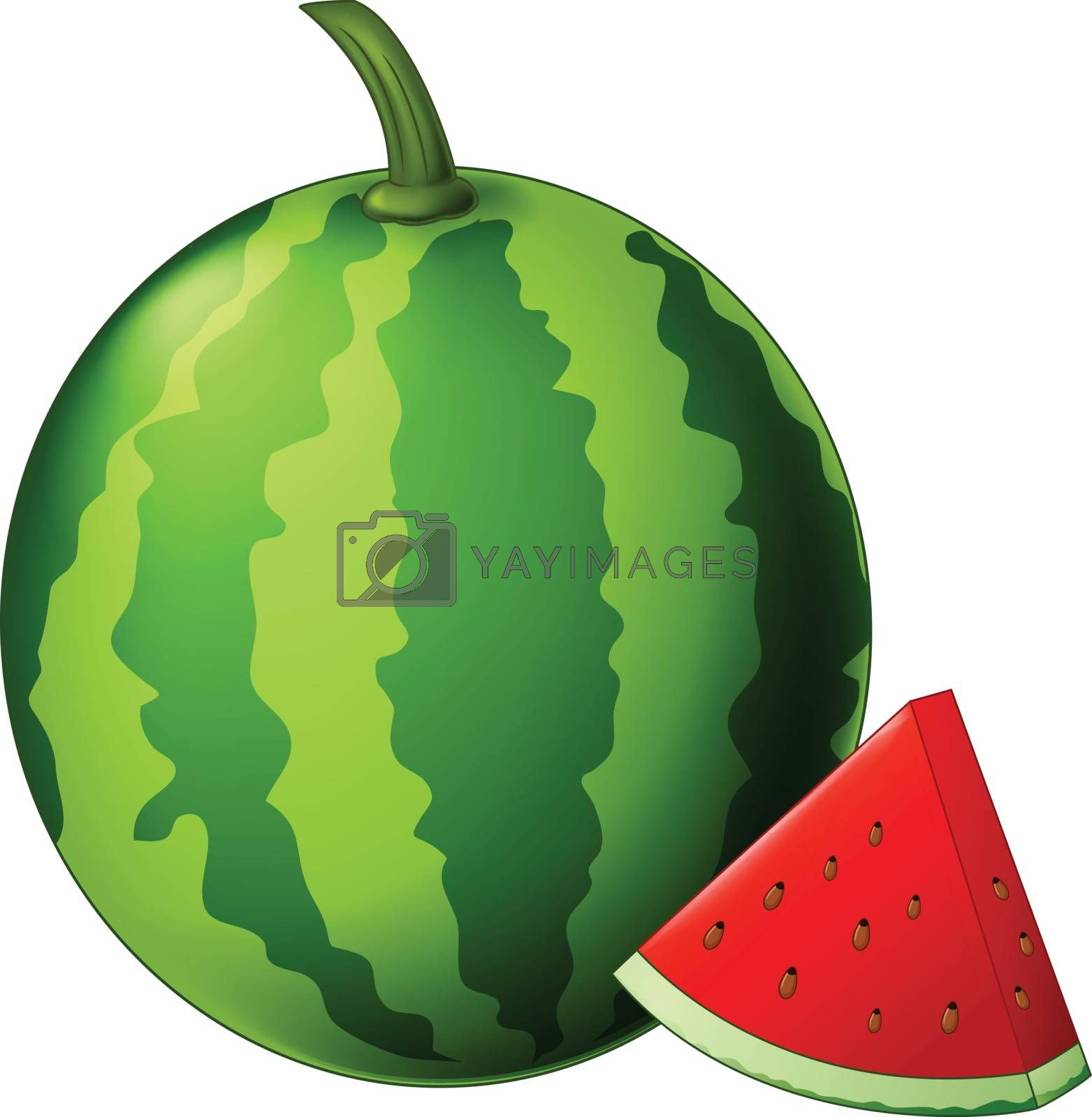 Royalty free image of Watermelon Isolated for your design by sujono