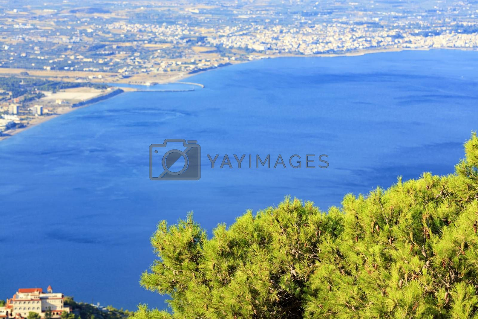 Beautiful fluffy fir branch with cones in bright sunlight against the background of a blurry sea of blue Corinthian gulf in Greece.