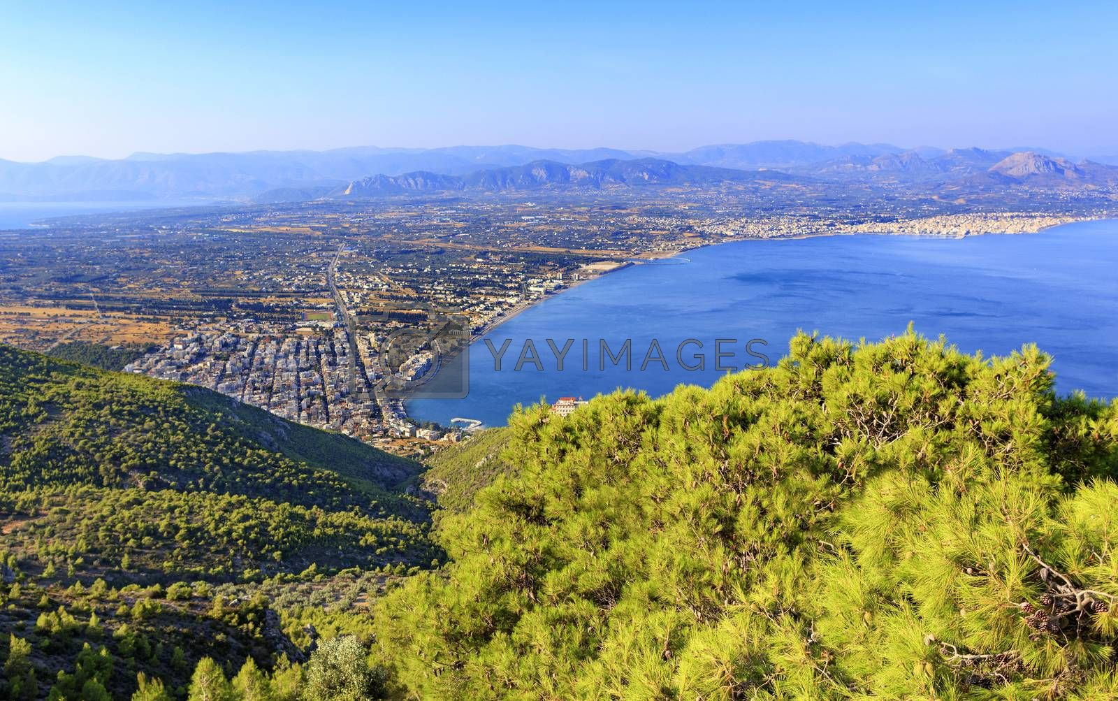 Royalty free image of A beautiful fluffy spruce tree with cones under the bright sun against the backdrop of the city of Loutraki and the sea of blue Corinthian Gulf. by Sergii