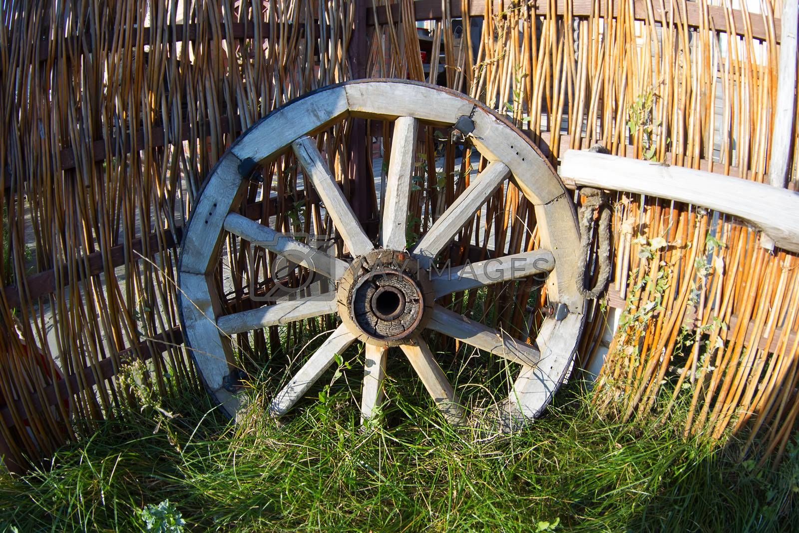Wooden wheel from a cart