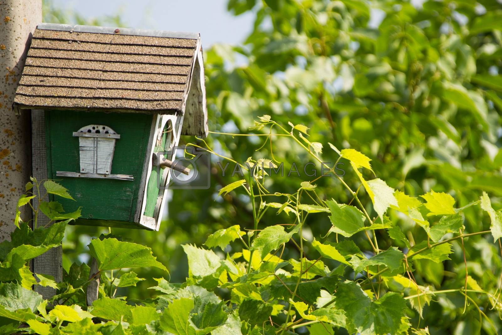 A birdhouse in the green leaves.House for birds. The bird house. The self-made birdhouse