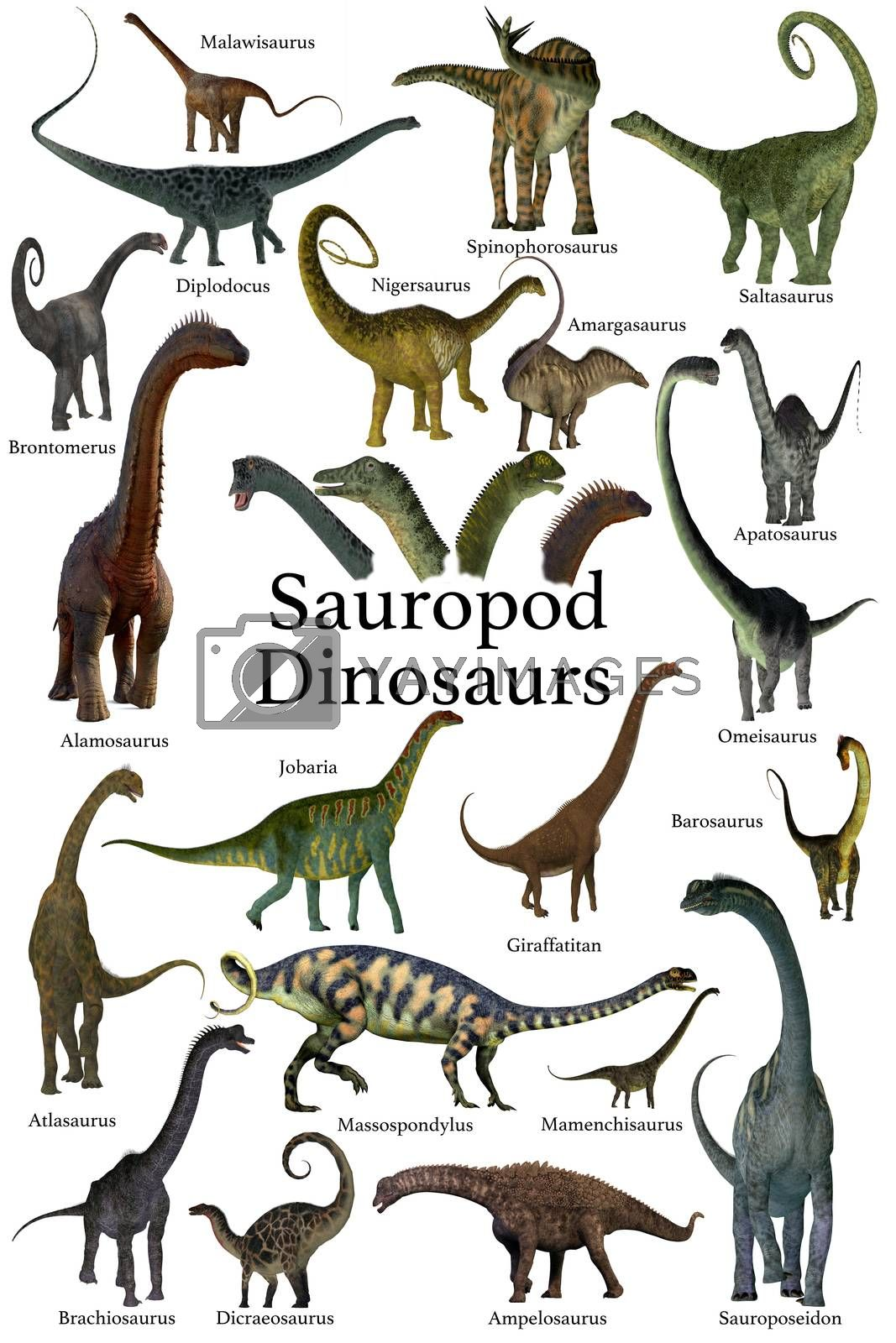 This is a collection of herbivorous sauropod dinosaurs who have long necks and tails with small heads.