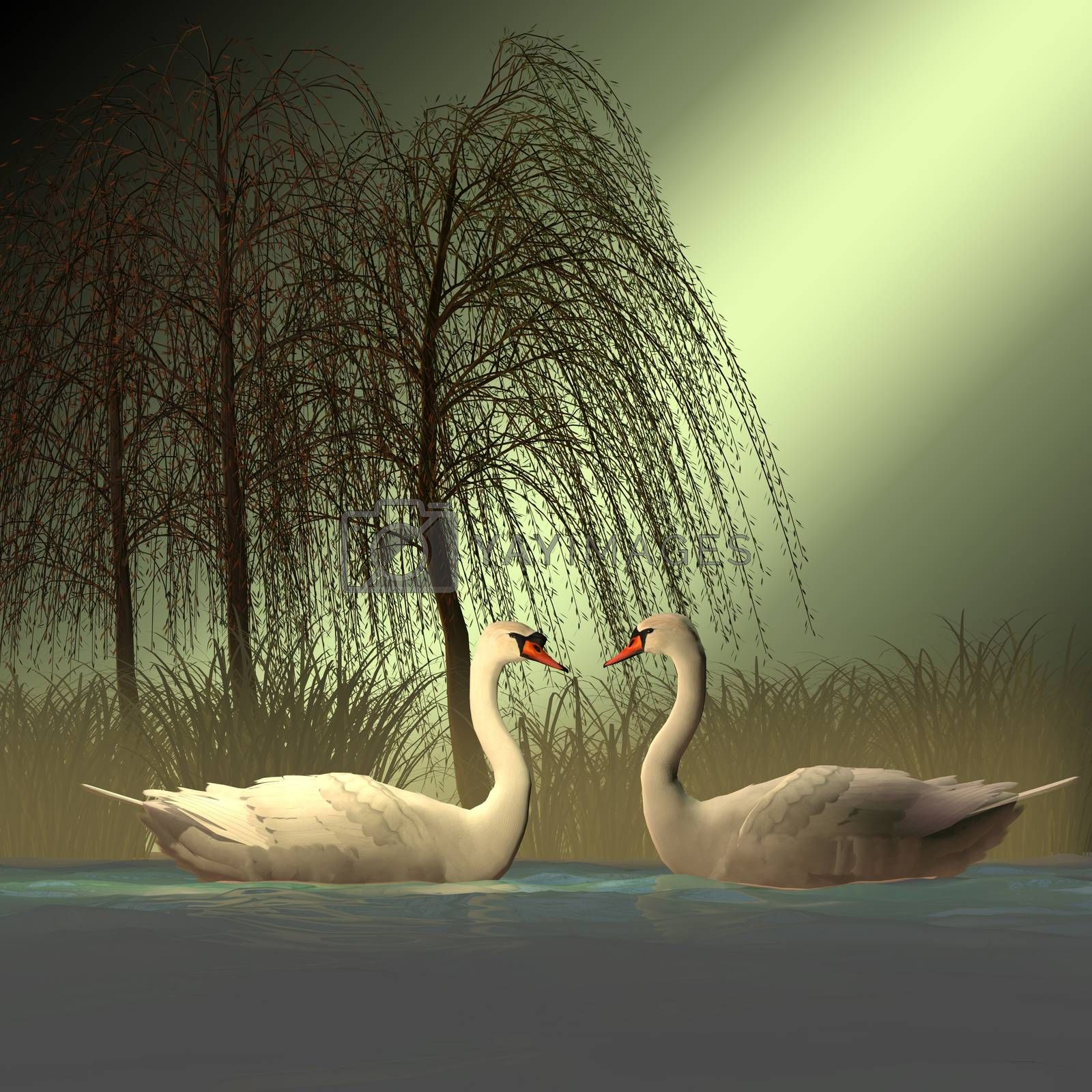The Mute Swan bird has white plumage with an orange beak bordered by black and lives in Siberia, Europe, Africa and North America.