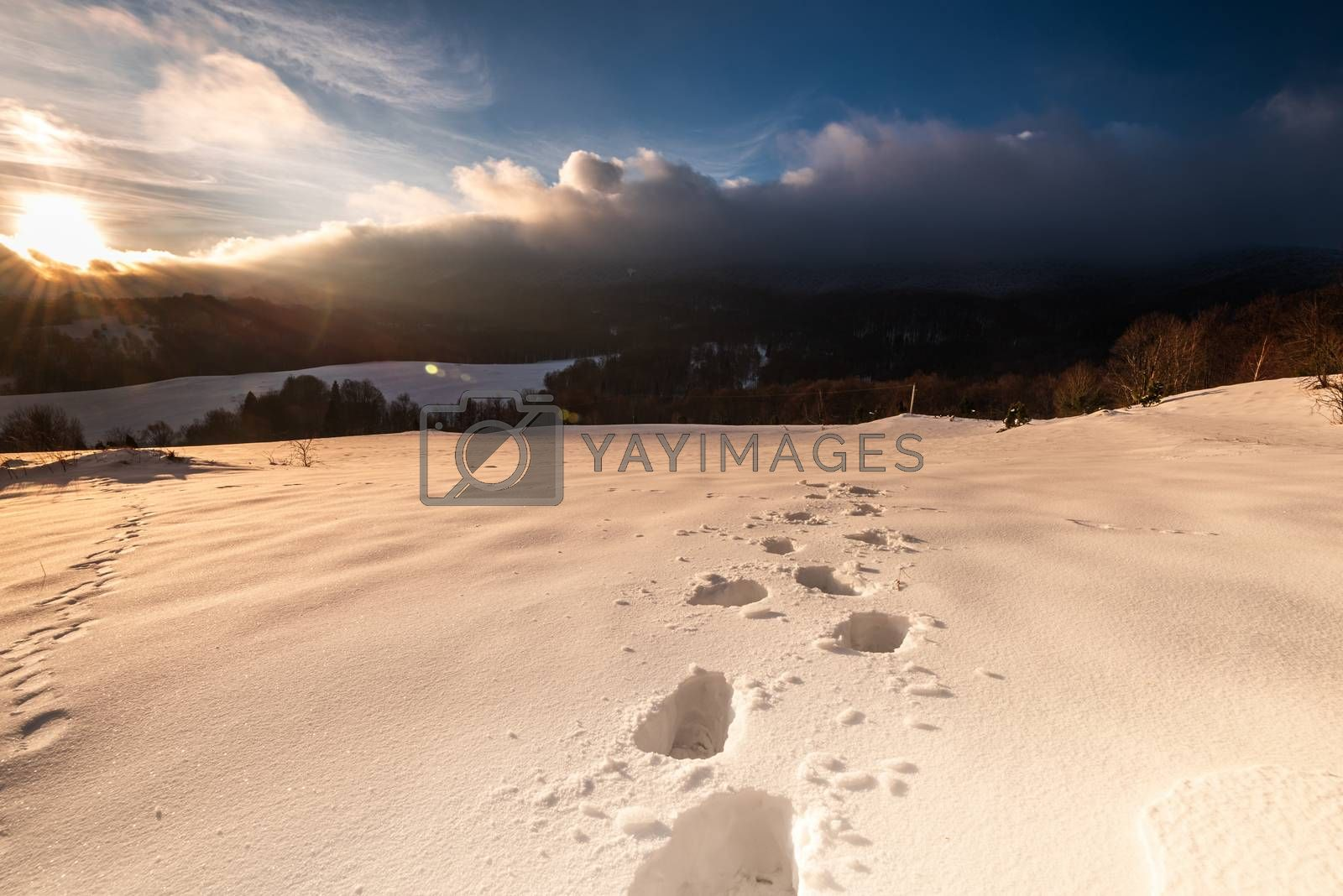 Foot Steps Trial in Deep Snow in Bieszczady Mountains at Winter. by merc67