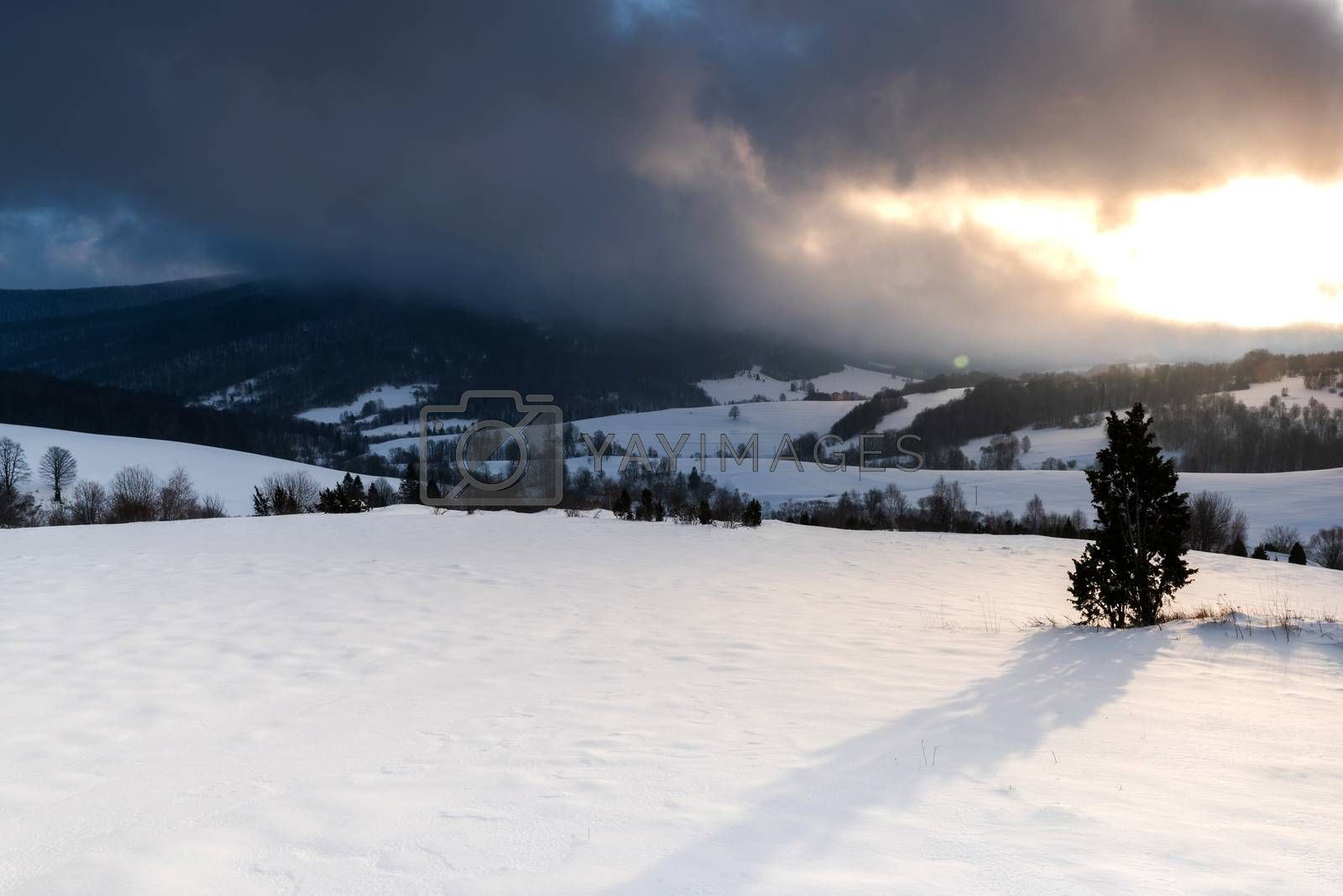 Snowy Meadow at Sunrise. Dramatic Stromy Clouds over Polonina in by merc67