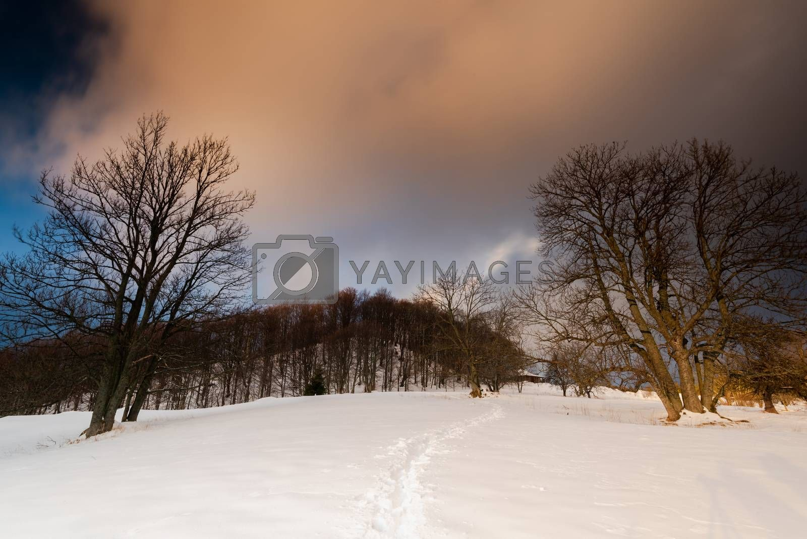 Trial in Snow in Carpathia Mountains at Winter Season by merc67