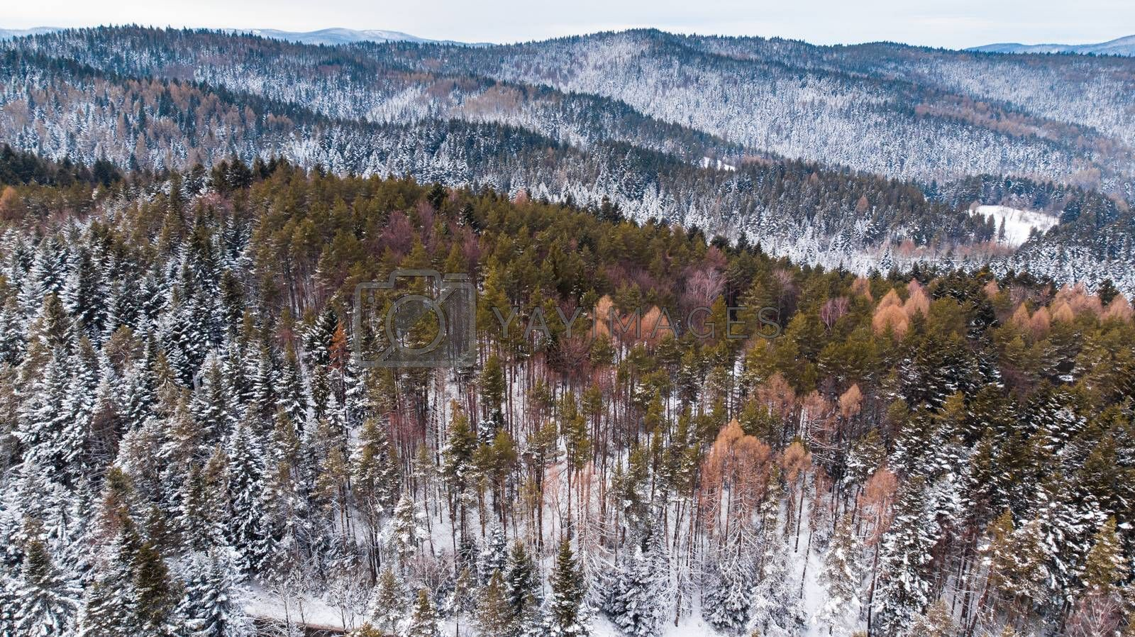 Woodlands on Hills Covered in Fresh Snow. Aerial Drone View by merc67