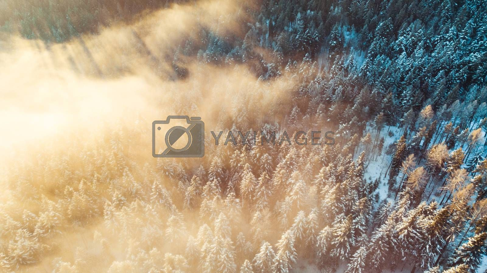 Amazing Sunrise over Foggy Winter Forest, Aerial Drone View.