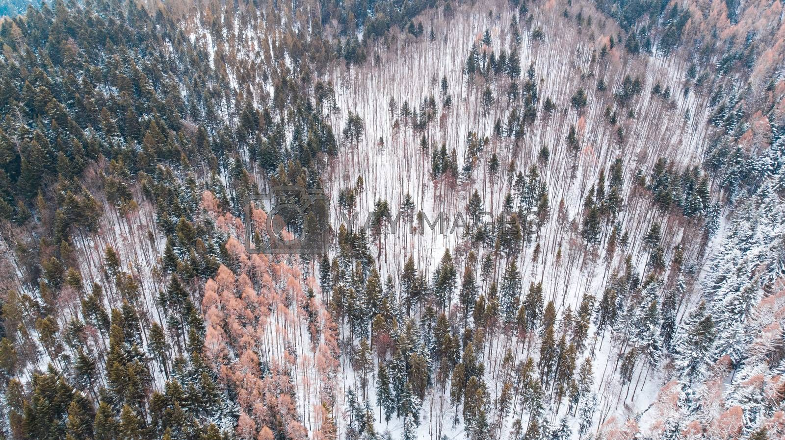 Wilderness at Winter Time. Climate Change and Snowless Winter. Aerial Drone View.
