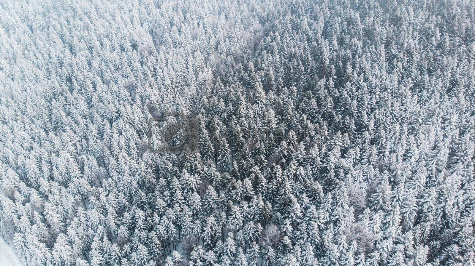 Abstract Winter Wonderland. Pine Trees Snow Covered. Aerial Dron by merc67