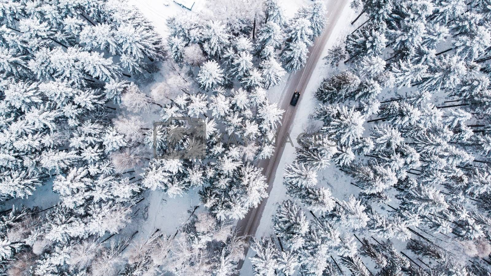 Car Drive Trough Snowy Forest in Winter Wonderland, Top Down Aer by merc67