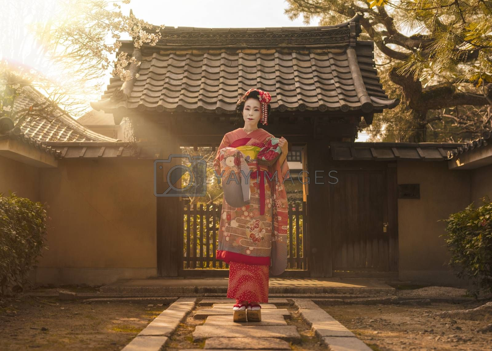 Maiko in a kimono posing on a stone path in front of the gate of a traditional Japanese house surrounded by cherry blossoms and pine trees in the rays of sunset.