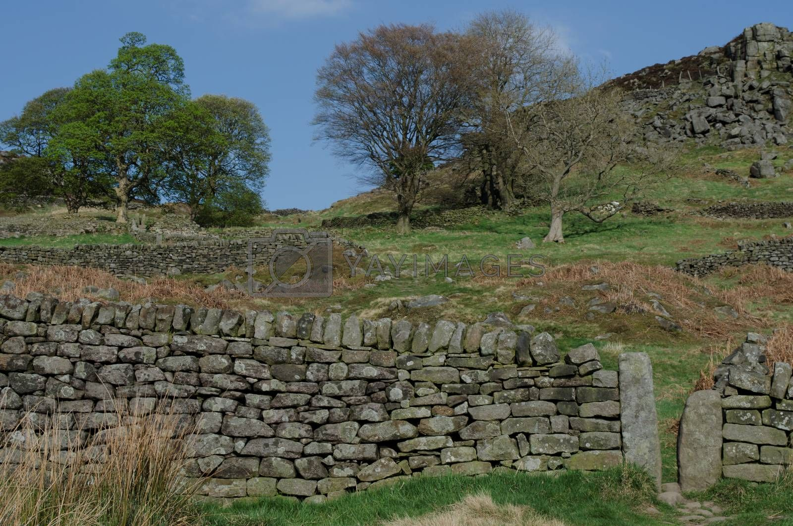 A drystone wall with a narrow gap for ramblers to pass through in the Peak District.