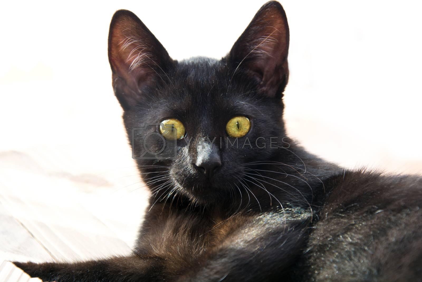 Portrait of cat. Pet animal concept.