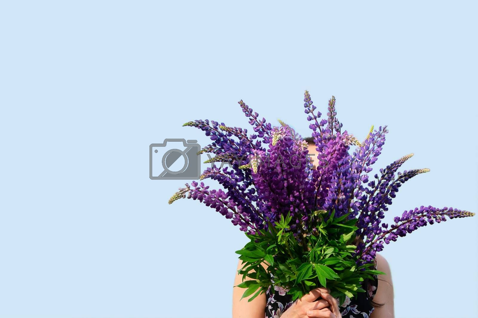 A large bouquet of flowers is held in the hands of a girl. Purple lupines on a blue background. Banner space for text. Gift, Holiday, Florist, Discount, Flower Shop