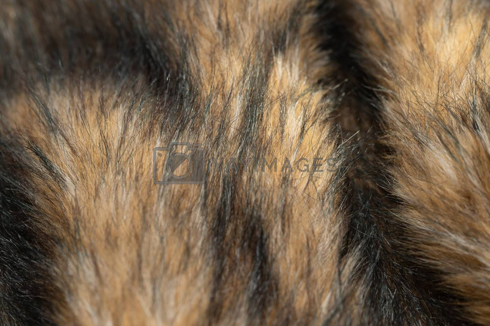 Close-up of a fluffy dark brown faux fur fabric with a background texture. Brown artificial fabric, can be used as a background. Fur for toys or clothing. Eco-friendly replacement of natural fur.