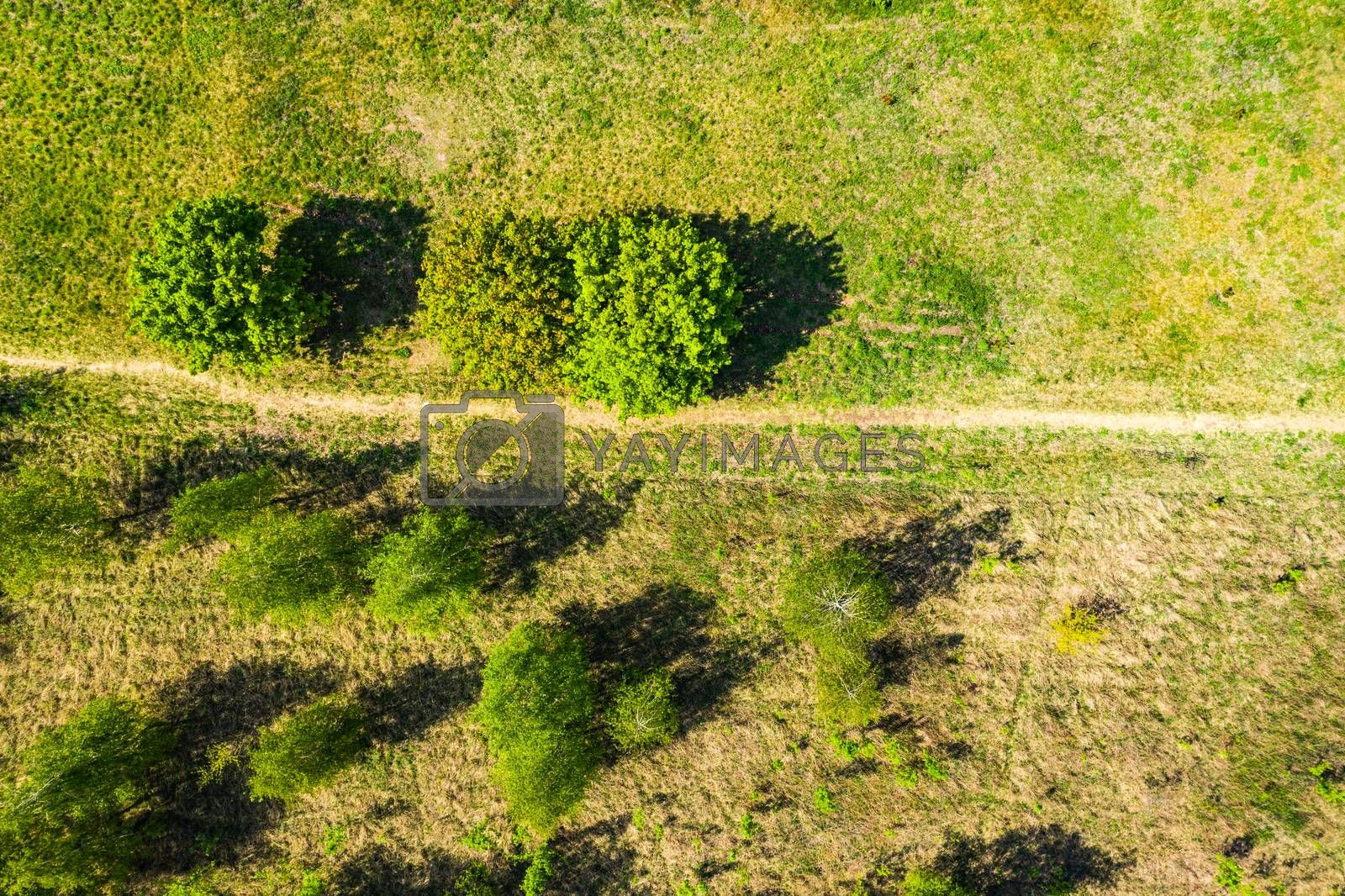Aerial photography a dirt road in the middle of a fir forest from a dron.