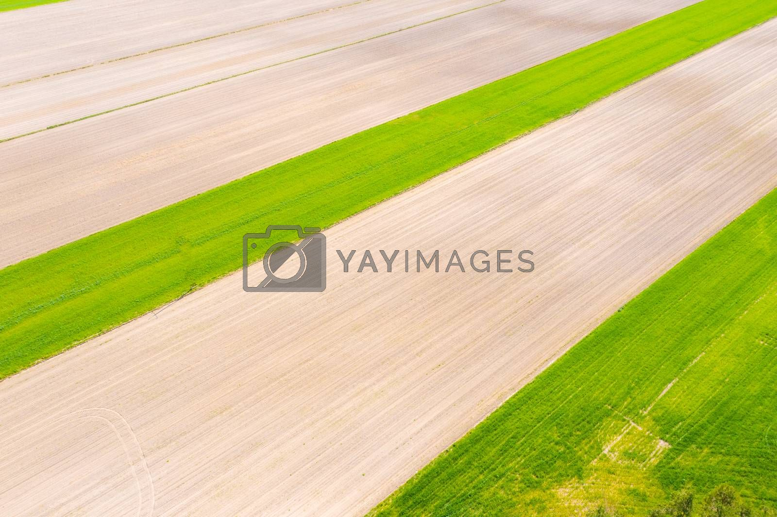 Vertical stripes of agricultural parcels of different crops. Aerial view shoot from drone directly above field