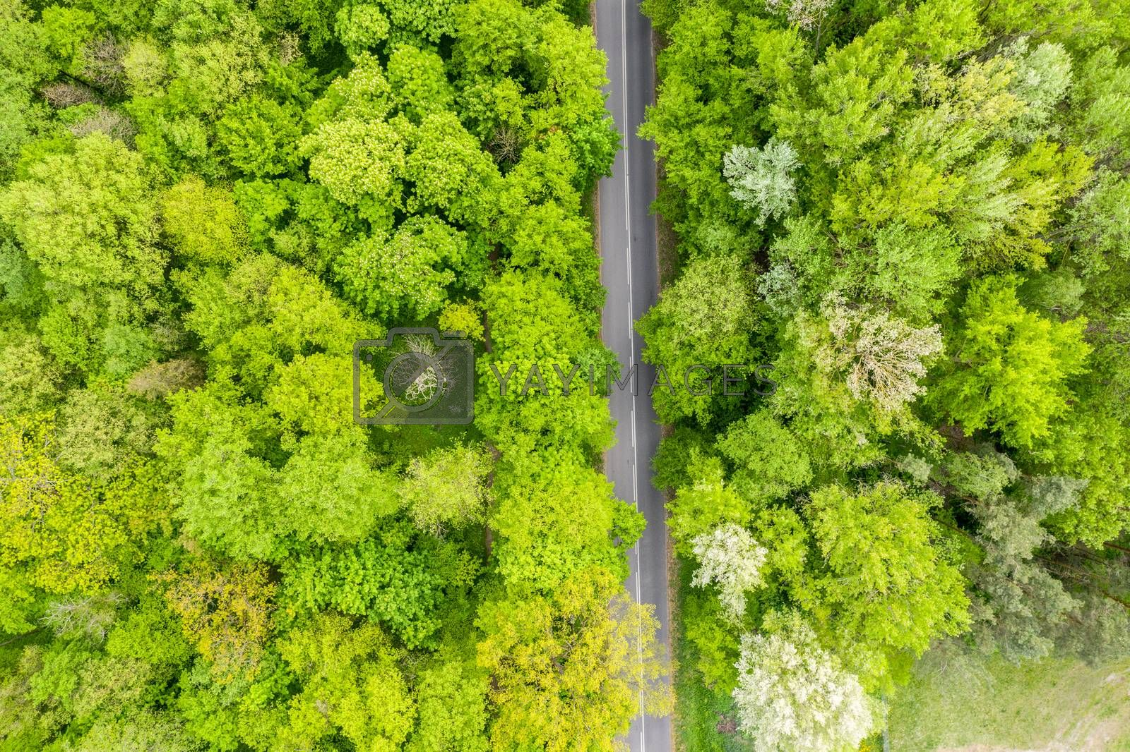 Aerial view of long road cutting through forest